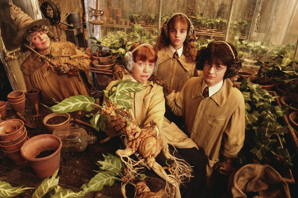 Sprout S Greenhouse Revenge Of The Mandrakes The Wonder Of